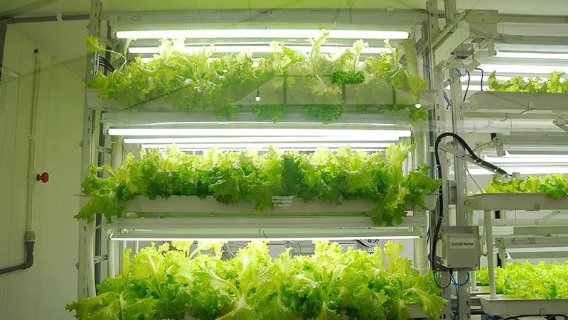 FPT, Fujitsu co-operate to develop IT-based vegetable production