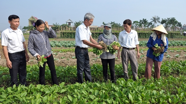 Vietnam makes initial results in organic agricultural