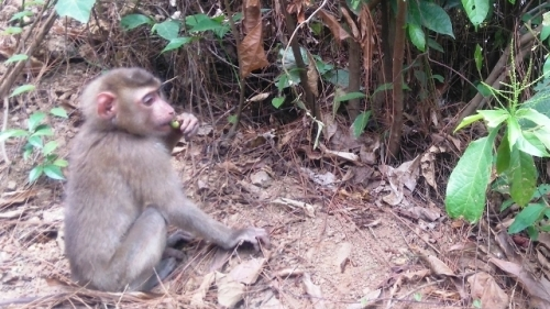 Rare monkey released back into wild