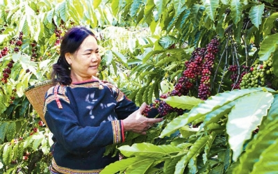 Solutions to expand the coffee market