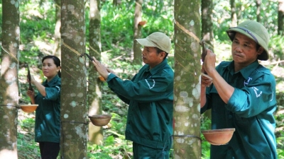 Vietnam Rubber Group to float in second quarter of 2017