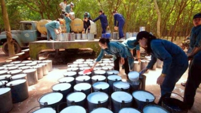 Vietnam earns US$392 million from rubber export in two months