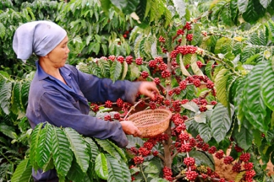 Insiders talk development of climate, integration-adapted coffee industry