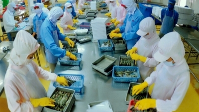 Shrimp exports expected to reach US$5 billion by 2020