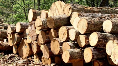 Vietnam, EU complete negotiations to boost legal timber trade