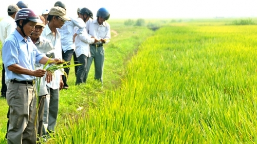 Streamlining credit flows for hi-tech agricultural development