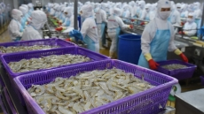 Vietnamese shrimps continue to encounter US anti-dumping duty
