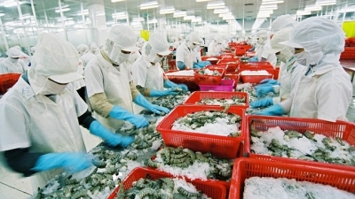 Chinese market promising for Vietnam's shrimps as exports surge 30%