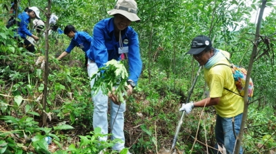 First enterprise in Phu Yen joins Global Forest & Trade Network
