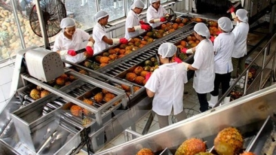 Vietnam's fruit and vegetable exports see strong growth