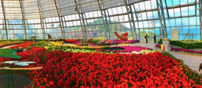 Tulip flower festival to open in Nha Trang