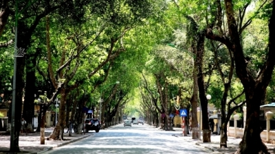 Green trees - the city's soul