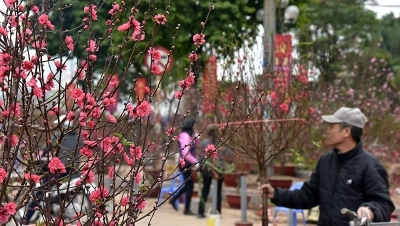 Hanoi streets blooming into colour to welcome a new spring