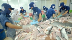 US antidumping duties on Vietnam's frozen fish fillets unfair: Ministry