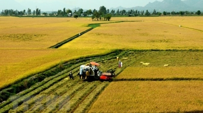 Enhancing added value for Vietnamese agricultural products