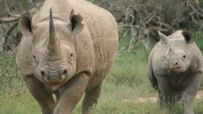Short film launched to call for end to rhino horn trade