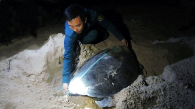 Con Dao closely monitors sea turtle habitat