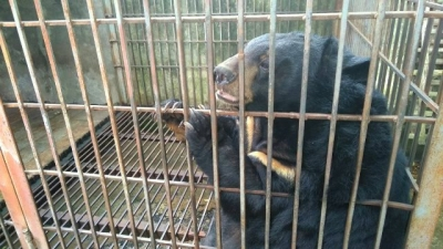 199th bear safe at Tam Dao bear sanctuary