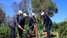 Japanese cherry blossom trees planted in Da Lat