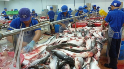 US is largest market for Vietnamese shark catfish