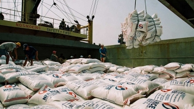 Making efforts to boost rice exports
