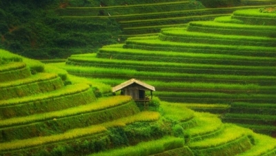 Vietnam's Mu Cang Chai terrace fields listed among world's most colourful places