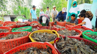 Online transaction floor expected to give strong boost to shrimp industry