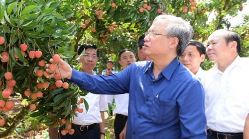 Bac Giang urged to promote development of key agricultural areas