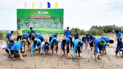 Launching submerged forest plantation in Mekong Delta region