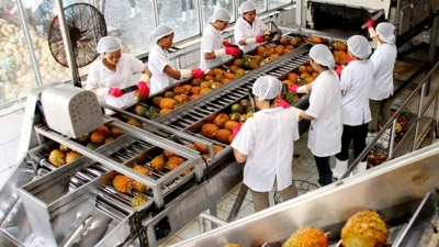 Vietnamese agricultural products take advantage of opportunities from EVFTA