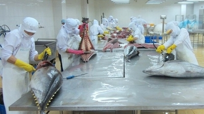 Tuna exports to Italy shoot up 60% in H1