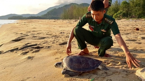 PM approves programme for conservation of endangered turtles