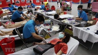HCM City's youths donate blood to fight coronavirus disease