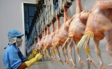 Promoting export of poultry products