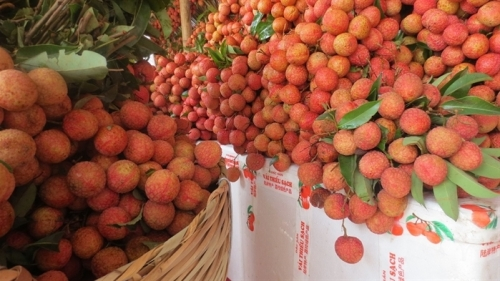 Vietnam, China hold conference to boost agricultural trade