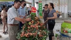 Bringing Vietnamese fruits to the world market