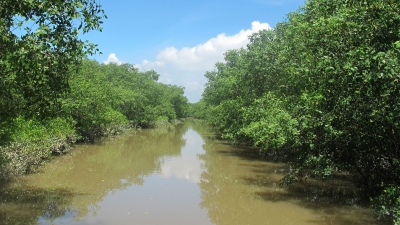 Vietnam establishes Thai Thuy wetland as a nature reserve