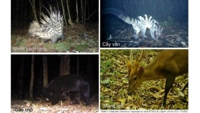 Rare mammal diversity discovered in Bidoup - Nui Ba National Park