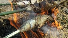 Ca Nuong Do (steamed broiled fish) in Hoa Binh province