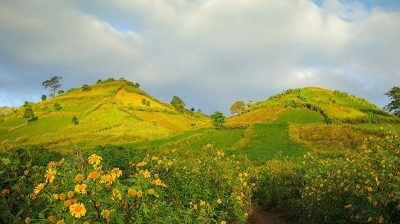 Wildflowers - Chu Dang Ya Volcano Week opens in Gia Lai