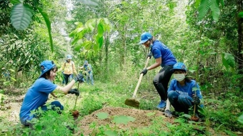New resources for forest protection