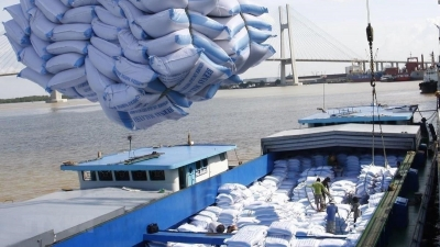 Higher quality bolsters Vietnamese rice exports