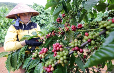 Focusing on increasing coffee's export value