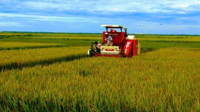 Quang Binh farmers enjoy bumper rice crop